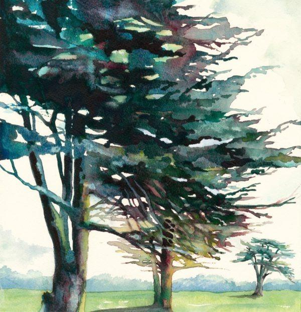 Butleight Cedars an Original Print by Jackie Henderson