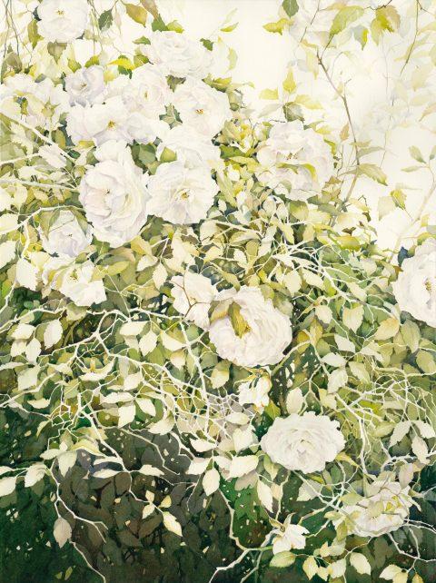 Georgies Roses